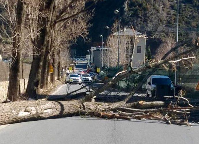 arbre caigut a la carretera d'Aixovall
