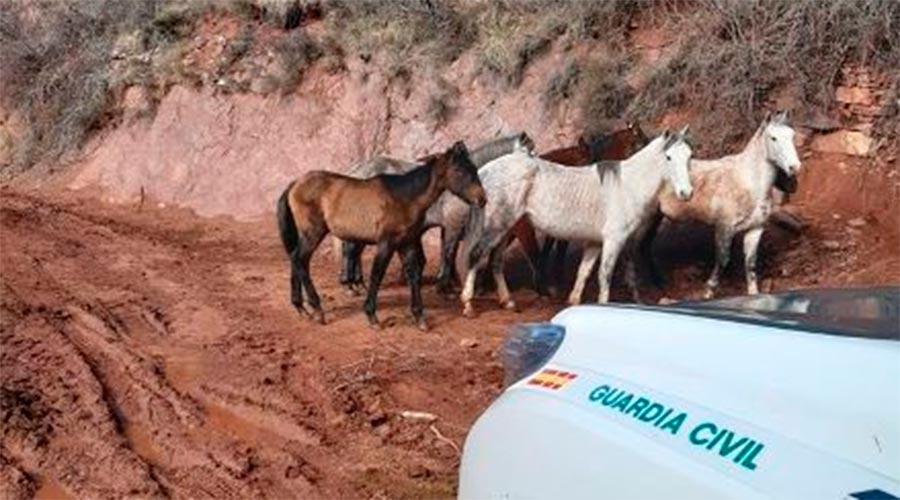 Els cavalls molt prims fotografiats per la Guàrdia Civil