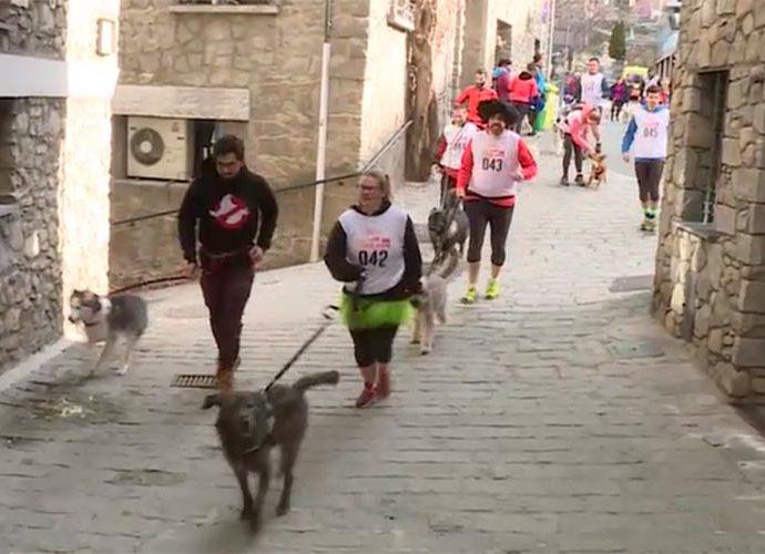 Un moment de la cursa Otso trail dog, amb els participants corren amb els seus gossos