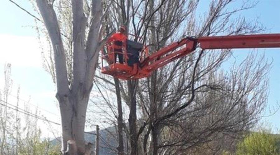 Un operari poda arbres