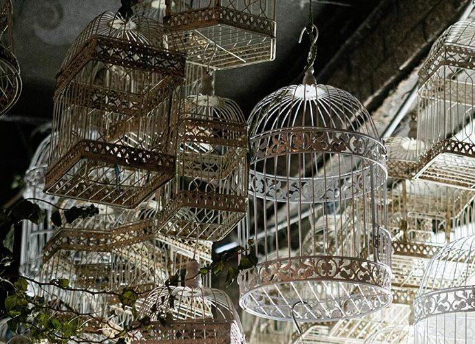 gàbies d'ocells