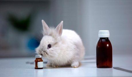 conill i antibiòtics