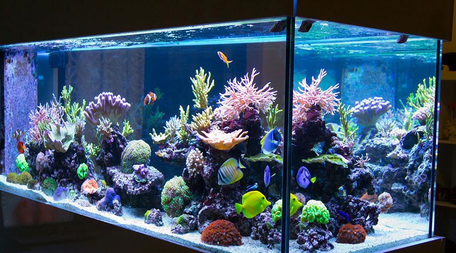 Il·luminació d'un aquari