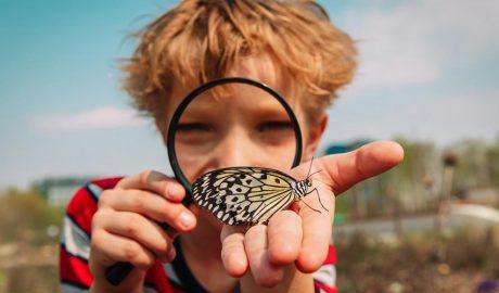 Un nen observa amb lupa una papallona