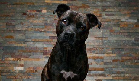 Imatge d'un gos